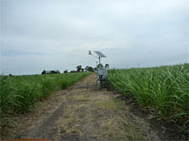 Sugarcane-Site-2-Picture-2